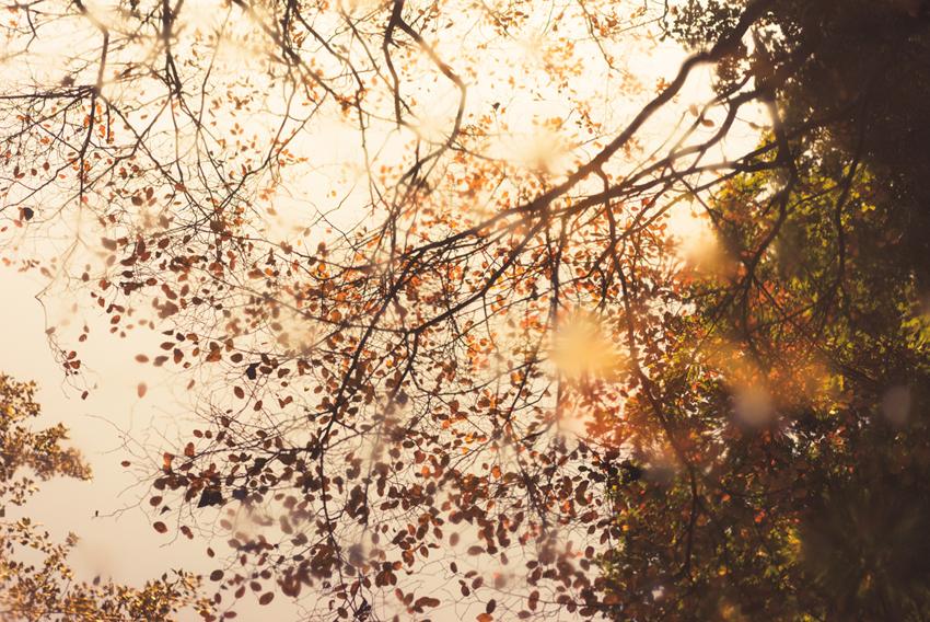 unsplash-com_ehudneuhaus_trees_k