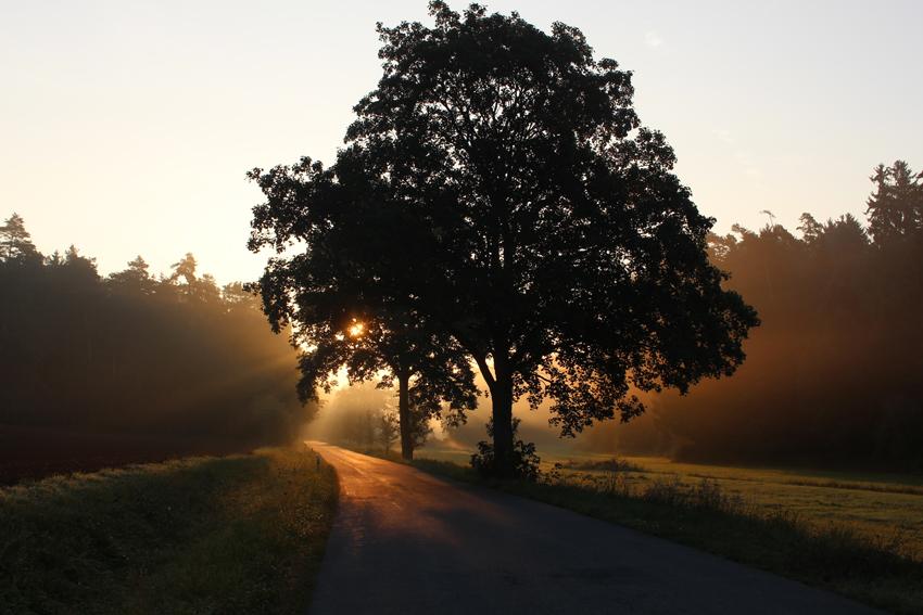 unsplash-com_kaidoerner_trees_k